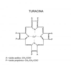turacina